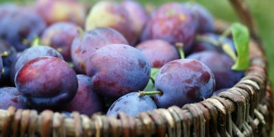 A new fruit in the basket: how to compare apples with pears… and now plums!