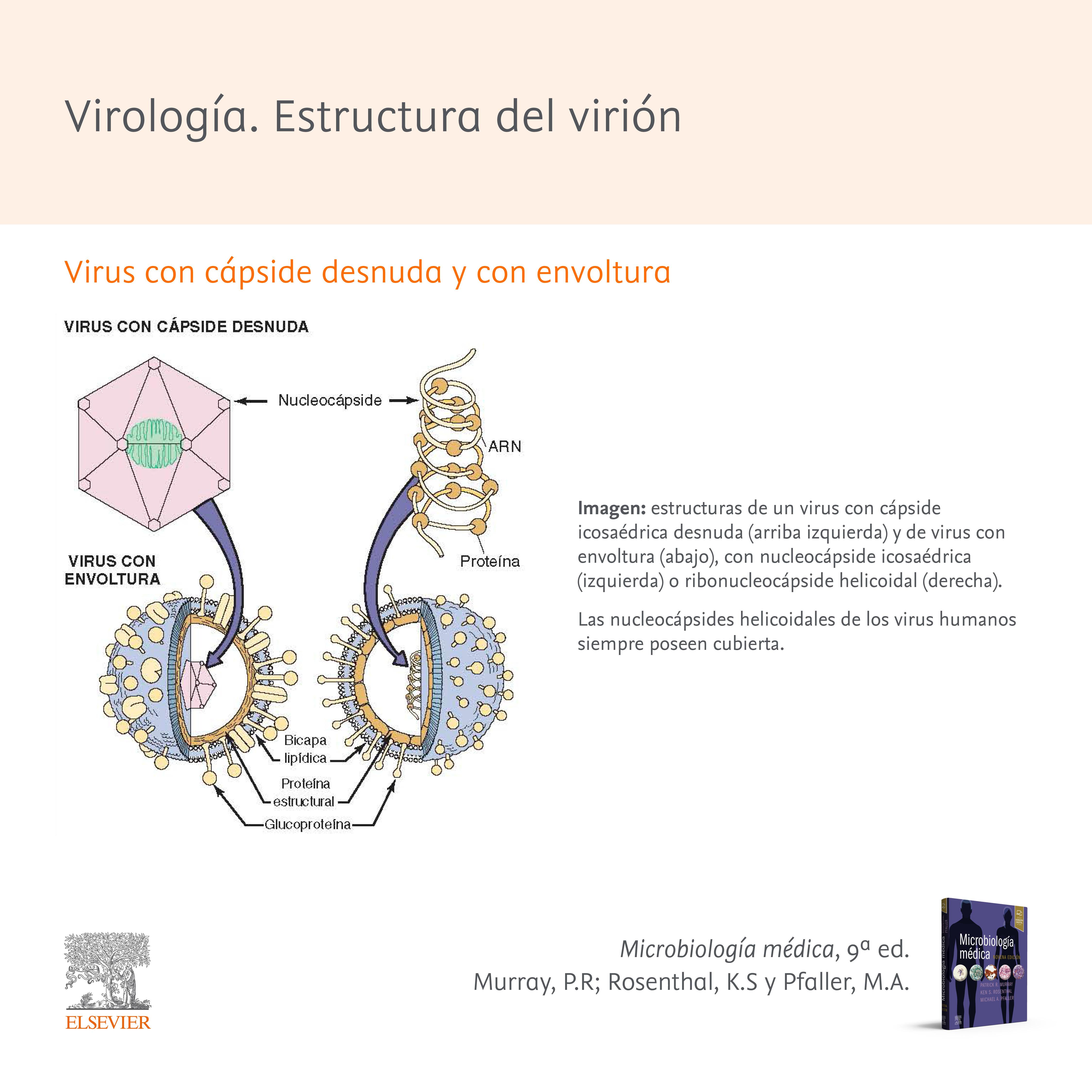 Virología. Estructura del virión, la partícula vírica
