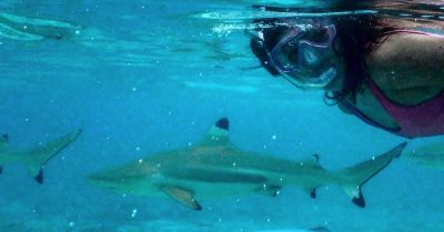 Holistic approaches to shark conservation