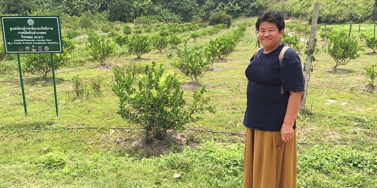 Dr. Sukanda Luangon Lewis, an economics professor and Deputy Director of Research at the Institute of Asian Studies at Chulalongkorn University in Thailand, visits a lime tree plot at the Knowledge Center for Increasing the Production Efficiency of Agricultural Commodity Production in northern Thailand. She is learning about successful development projects in Nan, where she will run the project on the development of creative tourism.