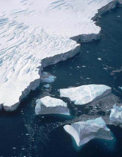 In Antarctica, boulders on the shallow seabed — once encrusted with a rich assemblage of species in intense competition for limited space — now mostly support a single species. (Photo: British Antarctic Survey)