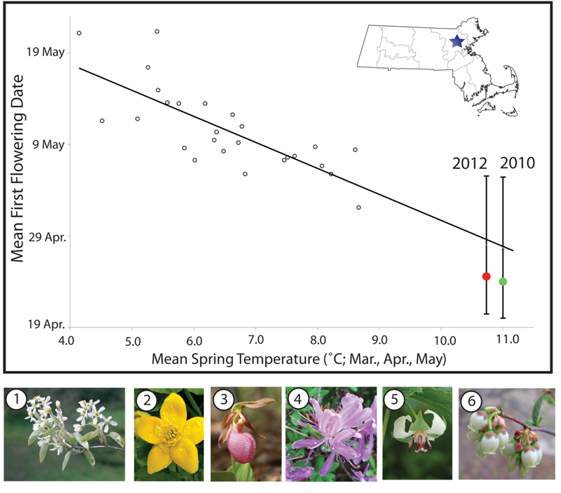 Plants flower earlier on average in warm years than in cool years, as indicated in this graph of common spring wildflowers in Concord, Massachusetts.