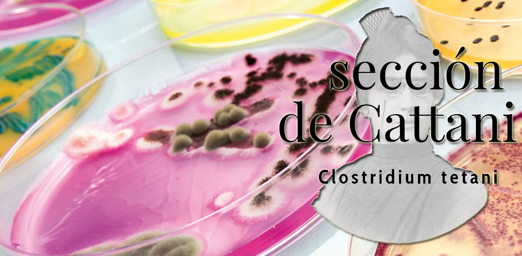 Sección de Cattani: Clostridium tetani, el agente productor del tétanos