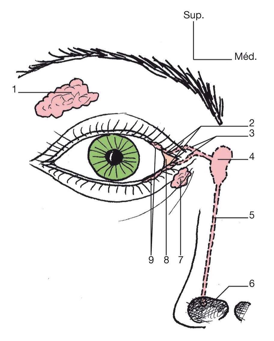 L'œil dans l'ouvrage de Michel Dufour_4