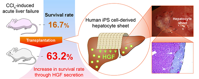 Guide for authors - Journal of Hepatology - ISSN 0168-8278